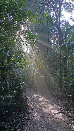 Forest Light MacRitchie - 14th April 2007