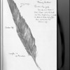 Turkey Vulture Feather--pencil sketch.