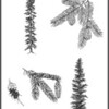 """Black Spruce and Engelmann Spruce appears on Anne Everitt's Blog """"Come and Bake Bread"""" 2012 @ <a href=""""http://comebreakbread.com/2012/09/29/reasons-to-get-your-kids-out-in-nature-with-favorite-nature-resources-and-a-printable/#comments"""">http://comebreakbread.com/2012/09/29/reasons-to-get-your-kids-out-in-nature-with-favorite-nature-resources-and-a-printable/#comments</a>"""