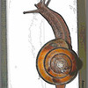 Pacific Sideband Snail (Monadenia fidelis).  (Photo art, colored pencil & pen.)  (5-2012)
