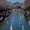 Koinoboris (banderas en forma de carpa) decorando el río Tsuruuda en Gunma para el Día del Niño<br /> דגלוני קוֹאינוֹבּוֹרי בצורה של קרפיונים מקשטים את הנהר לכבוד יום הילד