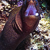 Moray - Bonaire