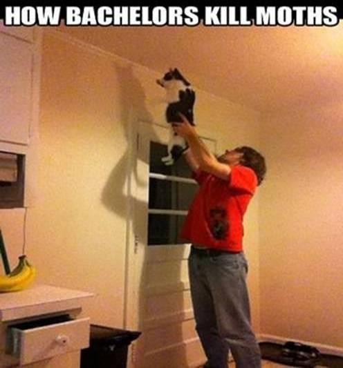 How Bachelours Kill Moths