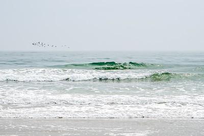 30 birds at sea.