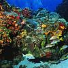*coral&fish