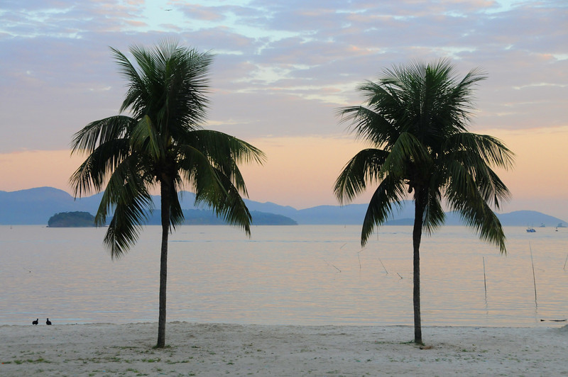 Two palms, Angra