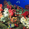 RedSoftCoral&Fish