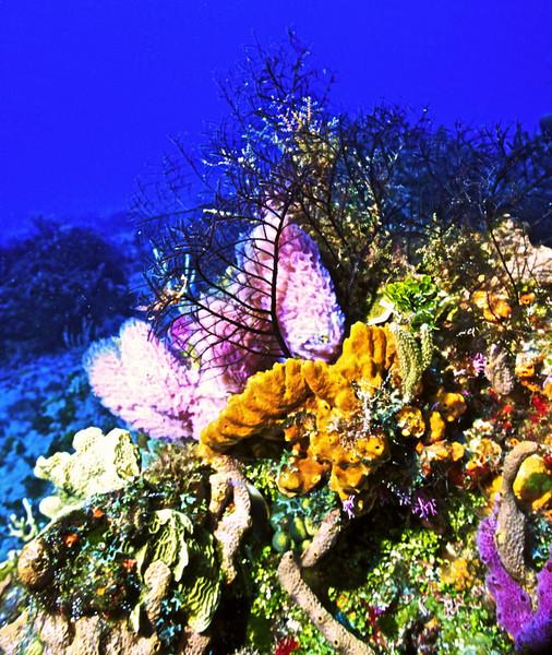 **Floral Bouquet