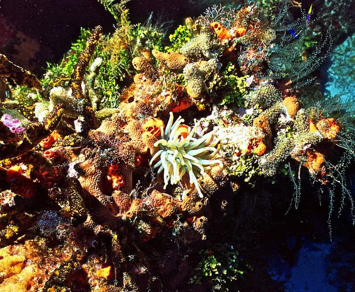 Anemone bouquet*