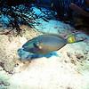 Parrotfish-2-Bonaire