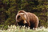 This guy was just eating wildflowers along a beach in Glacier Bay Alaska...
