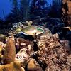 Parrotfish Bonaire