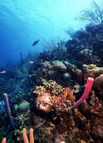 Coral-Bonaire