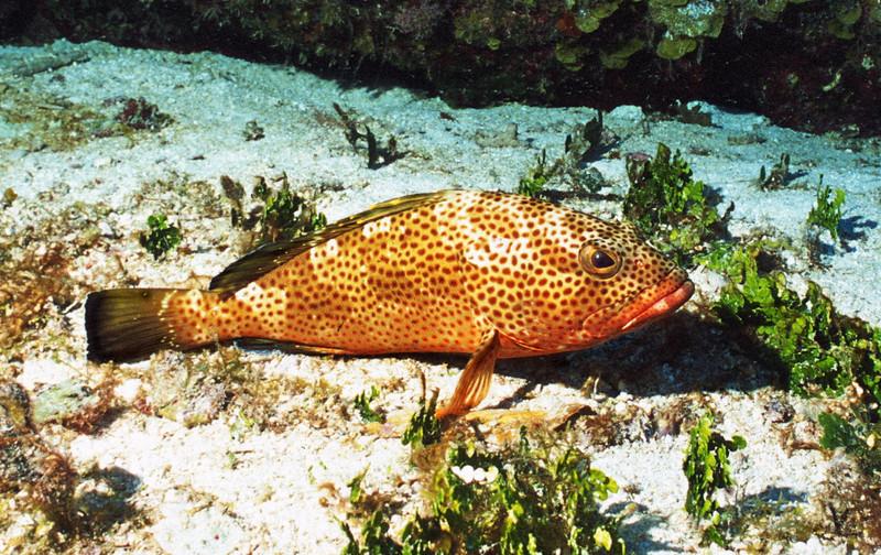Yassar Arafish