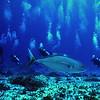 *1 Fish 8 Divers
