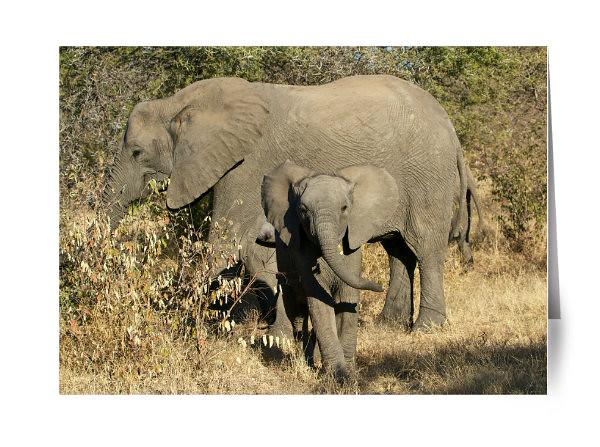 YOUNG ELEPHANT, TIMBAVATI