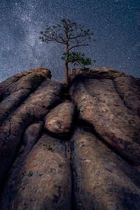 The Peace Tree