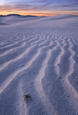 White Sands Predator