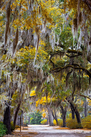 Spanish Moss, Savannah, Georgia, America