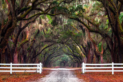 Wormsloe, Savannah, Georgia, America