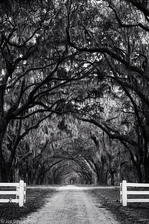 Black and White, Wormsloe, Savannah, Georgia, America