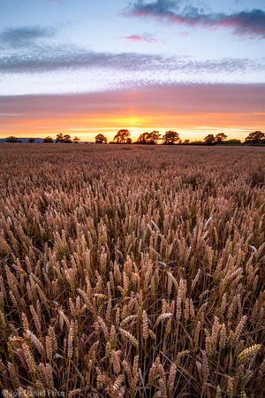 Dramatic Sunset over a wheat field in Herefordshire, England