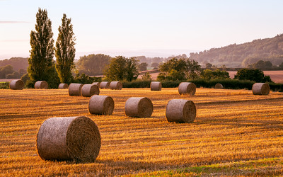 Straw Bales, Field, Hereford, Herefordshire, England