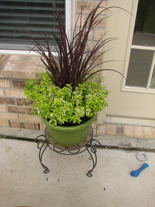 Arrangement done by Jill.  The purple grass is artificial.  The green plant is real.