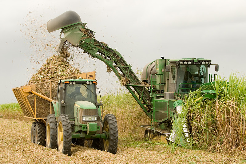 AGRICULTURAL PHOTOGRAPHY - SUGAR