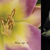 flowerdiptych2