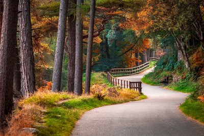 Autumn, Walking Path at Glendalough, County Wicklow, Ireland