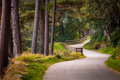 Walking Path at Glendalough, County Wicklow, Ireland