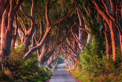 The Dark Hedges, Ballymoney, County Antrim, Northern Ireland