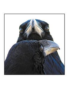 """Raven Soul Mates"" note card"