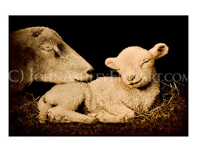 """Peaceful Lamb"" note card"