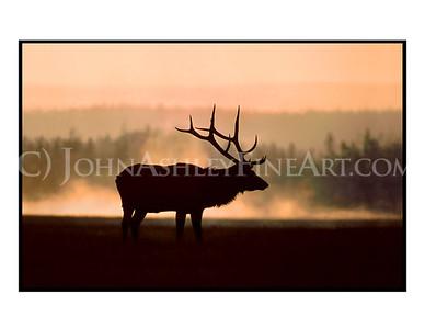 """""""Elk Mist"""" note card"""