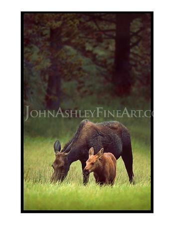 """""""Moose Meadow"""" note card"""