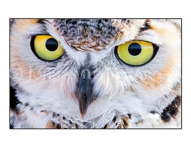 """Owl Eyes"" note card"