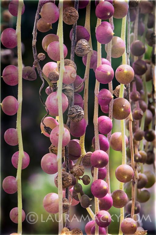 Nature's Beads