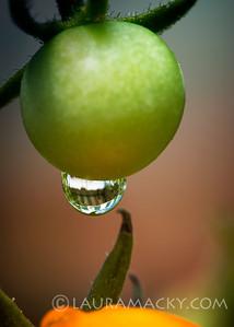 Tomato Drip