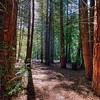 Redwood Regional Park, Oakland, California