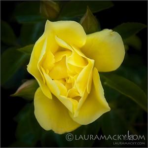Yellow Revealed