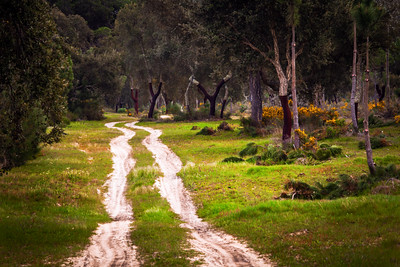 Dirt Path, Alentejo, Portugal