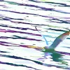 Sea Gull Take-Off