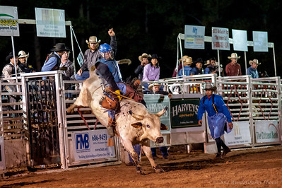 Cotton Blossom Rodeo, March 2014