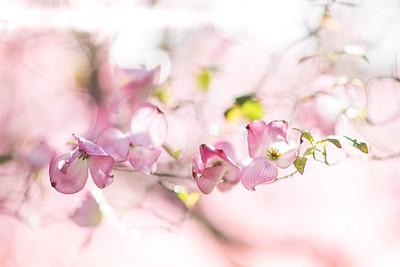 SpringT1