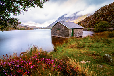 Flowers at Lake Ogwen, Capel Curig, Snowdonia, Wales