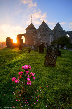 Rose, Church at Winchelsea, Sussex, England