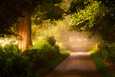 Misty Road, Rye, Sussex, England