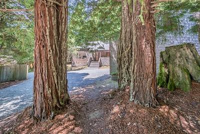 Beautiful Redwoods
